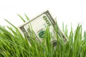 money-in-grass