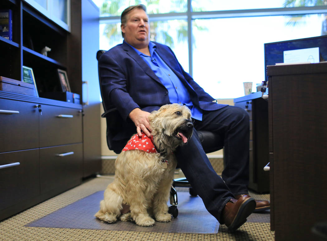 Sadie, a 9-year-old Wheaten Terrier, who has to approve all hires at Goettl Air Conditioning, sits with Ken Goodrich, 55, the CEO of Geottl Air Conditioning, in his office on Friday, May 19, 2017, ...